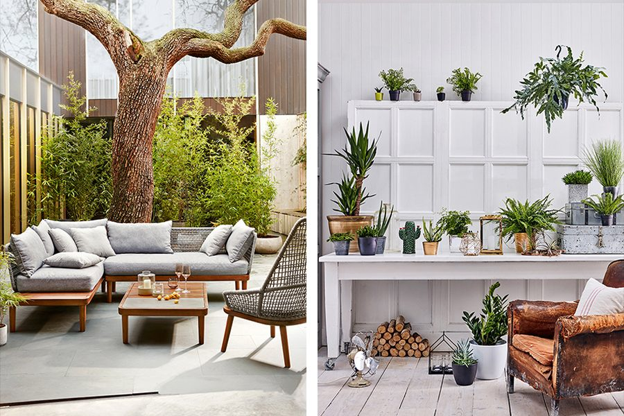 FOR THE LIVING ROOM Certain House Plants Release Moisture Into The Air,  Acting As Natural Humidifiers, Proving Themselves Particularly Beneficial  During The ...