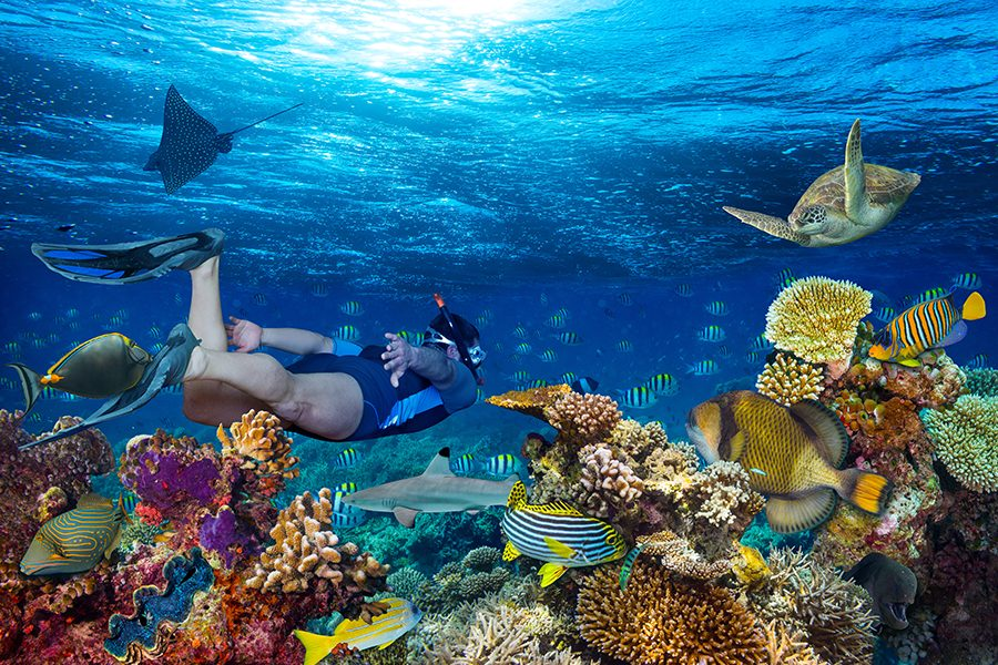 Vibrant Caribbean: Diving In The Caribbean's Vibrant Underwater World