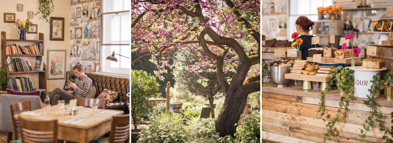 Chelsea Physic Garden cafe