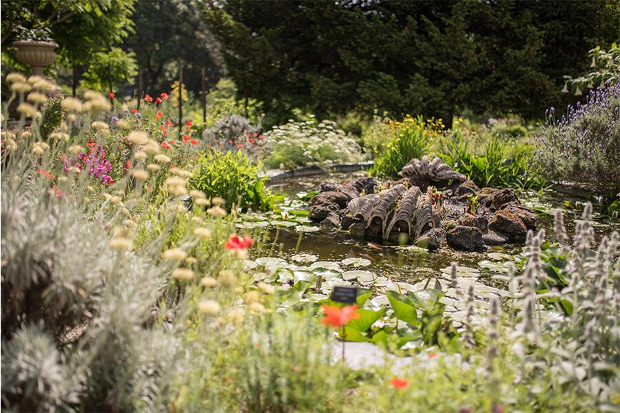 Chelsea Physic Garden Pond
